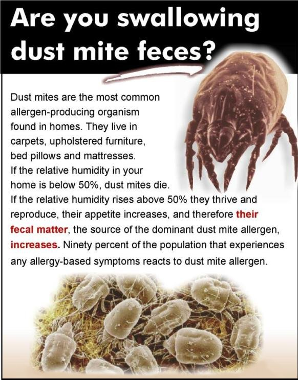 Dust Mites In Your Bed